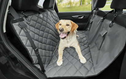 Why is a Dog Car Harness Necessary?