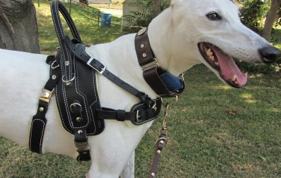 Have a Dog Harness for Car to Ensure Safety Riding with Your Pet