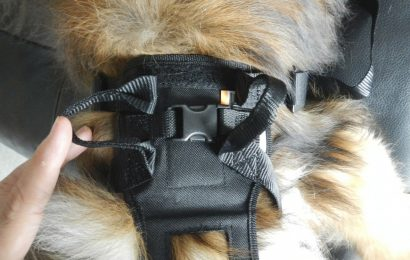Reason and Ideas of Using Dog Harness for Car