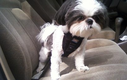 Dog Car Harness – The Basic Safety Rule for Driving with Pet
