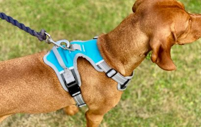 Importance of Dog Harness While Travelling