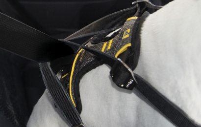 The Benefits of Having Dog Harness for Car