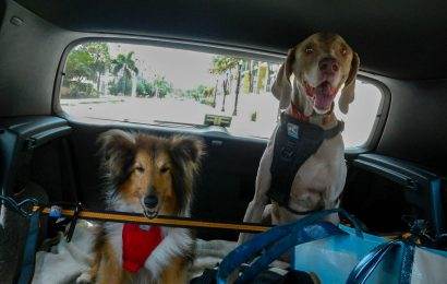 Dog Car Harness – A Must-Have Item While Riding Your Dog