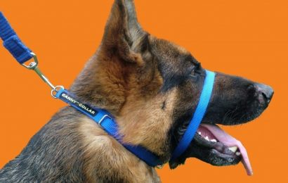 Tips to Choose the Best Dog Harness