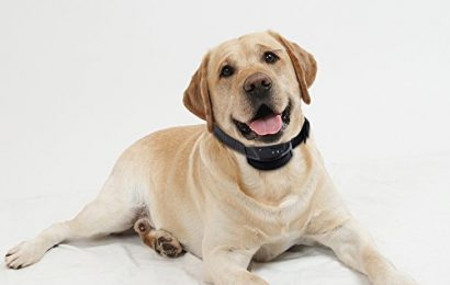 A Brief Look at the Different Bark Collars