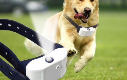 3 Best Brands of Bark Collars for Dogs
