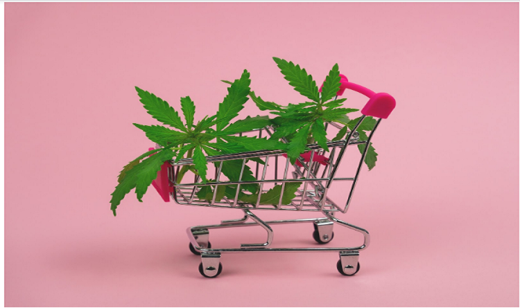 CBD Products Varieties: Exploring Main Types, Common Forms & Optimal Doses